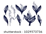 lily of the valley big set.... | Shutterstock .eps vector #1029573736