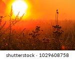field grass in the east sun ... | Shutterstock . vector #1029608758