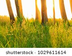 spring grass and trees at... | Shutterstock . vector #1029611614