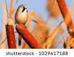 incredibly beautiful wild bird  ... | Shutterstock . vector #1029617188