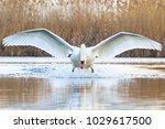 incredibly beautiful white bird ... | Shutterstock . vector #1029617500