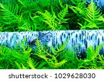 northern birch and thickets of... | Shutterstock . vector #1029628030