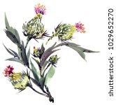 Watercolor Painted Thistle...