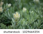 macro close up dew in morning... | Shutterstock . vector #1029664354