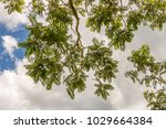 leaves against cloudy sky... | Shutterstock . vector #1029664384