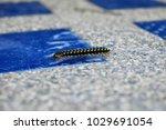 Small photo of reptilia in pool