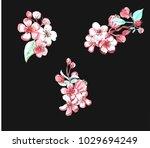 watercolor painting sakura... | Shutterstock . vector #1029694249
