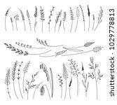 vector set with cereals  grass  ... | Shutterstock .eps vector #1029778813