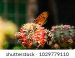 Butterfly Wings Orange Fly On A ...