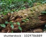Decayed Tree It Is A Fertilize...