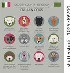 dogs by country of origin.... | Shutterstock .eps vector #1029789244