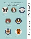 dogs by country of origin.... | Shutterstock .eps vector #1029789664