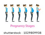 cartoon woman pregnancy stages... | Shutterstock .eps vector #1029809938