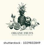 Fruits Hand Drawn Vector...
