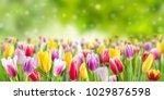 tulip flowers meadow  selective ... | Shutterstock . vector #1029876598