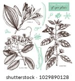 vector collection of tonic and... | Shutterstock .eps vector #1029890128