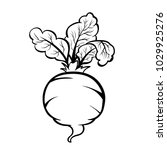 vector hand drawn illustration... | Shutterstock .eps vector #1029925276