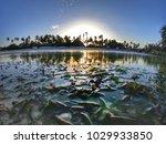 sunset beach in africa   Shutterstock . vector #1029933850