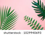 tropical palm leaf and fern... | Shutterstock . vector #1029940693