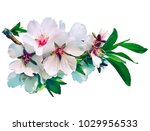 a branch of gentle white almond ... | Shutterstock . vector #1029956533