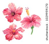 realistic tropical botanical... | Shutterstock . vector #1029959170
