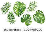 realistic tropical botanical... | Shutterstock . vector #1029959200