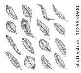 set of  hand drawn feathers... | Shutterstock .eps vector #1029973600