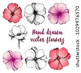 set of beautiful hand drawn... | Shutterstock .eps vector #1029976570