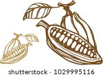 illustration of a cocoa bean... | Shutterstock .eps vector #1029995116