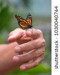 closeup of a monarch butterfly... | Shutterstock . vector #1030040764