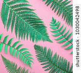 creative tropical fresh fern... | Shutterstock . vector #1030042498