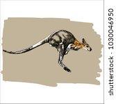 a jumping kangaroo hand drawn...   Shutterstock .eps vector #1030046950