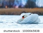 royal white bird floating along ... | Shutterstock . vector #1030065838