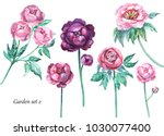 floral illustration. peonies.... | Shutterstock . vector #1030077400