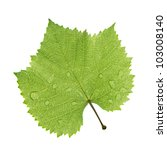 Grape Leaf With Water Drop...