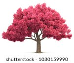 cherry blossom tree isolated 3d ... | Shutterstock . vector #1030159990