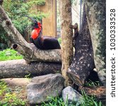 Small photo of Magnificent Frigatebird in tropical garden. Males have a distinctive red gular pouch, which they inflate during the breeding season to attract females.