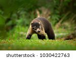 animal from tropical costa rica....   Shutterstock . vector #1030422763