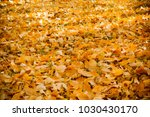 a carpet of yellow autumn... | Shutterstock . vector #1030430170
