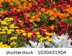 flower garden  nature | Shutterstock . vector #1030431904
