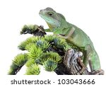 chinese water dragon on white... | Shutterstock . vector #103043666