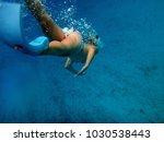 sealife of mystery island ... | Shutterstock . vector #1030538443