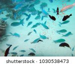 sealife of mystery island ... | Shutterstock . vector #1030538473