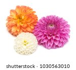 three dahlias flowers isolated... | Shutterstock . vector #1030563010