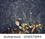 grass and leaves | Shutterstock . vector #1030573093