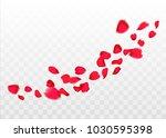 red sakura or rose falling... | Shutterstock .eps vector #1030595398