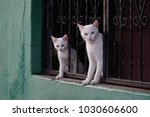 mama and baby cats   Shutterstock . vector #1030606600