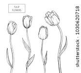 set of tulip flowers hand drawn ...   Shutterstock .eps vector #1030620718