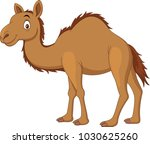 cartoon camel isolated on white ... | Shutterstock .eps vector #1030625260
