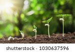 concept agriculture planting... | Shutterstock . vector #1030637596